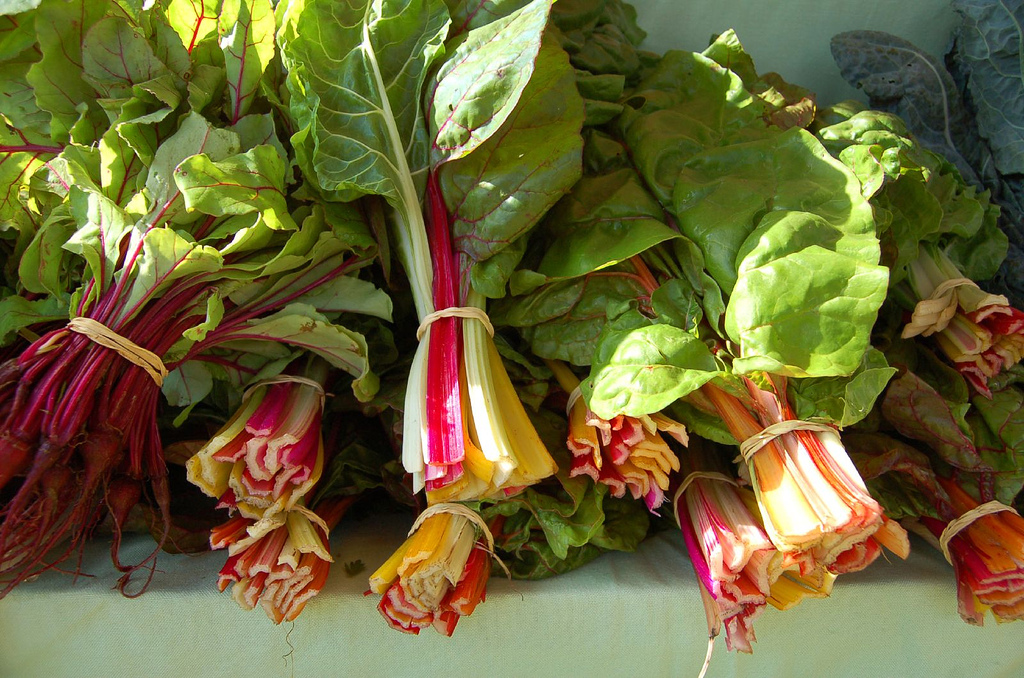 Beautiful rainbow chard from Wildroot Farm in Maine