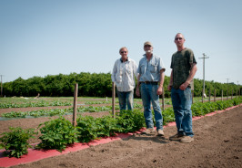 Mike Hessel and Tim and Terrill Winn in the melon fields