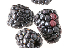 Falling Blackberries