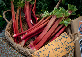 Rhubarb at the Farmers Market