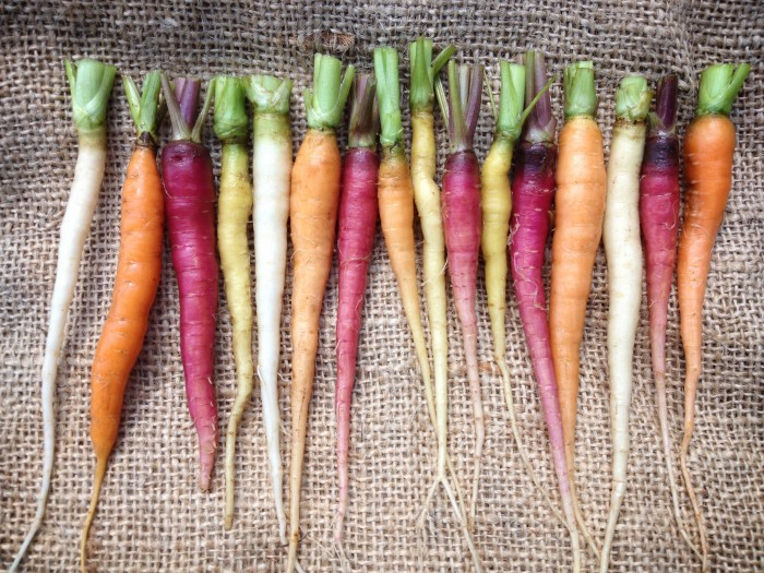 Carrots from Great Road Farm Carts and Tools