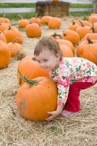 Cute little girl choosing her pumpkin