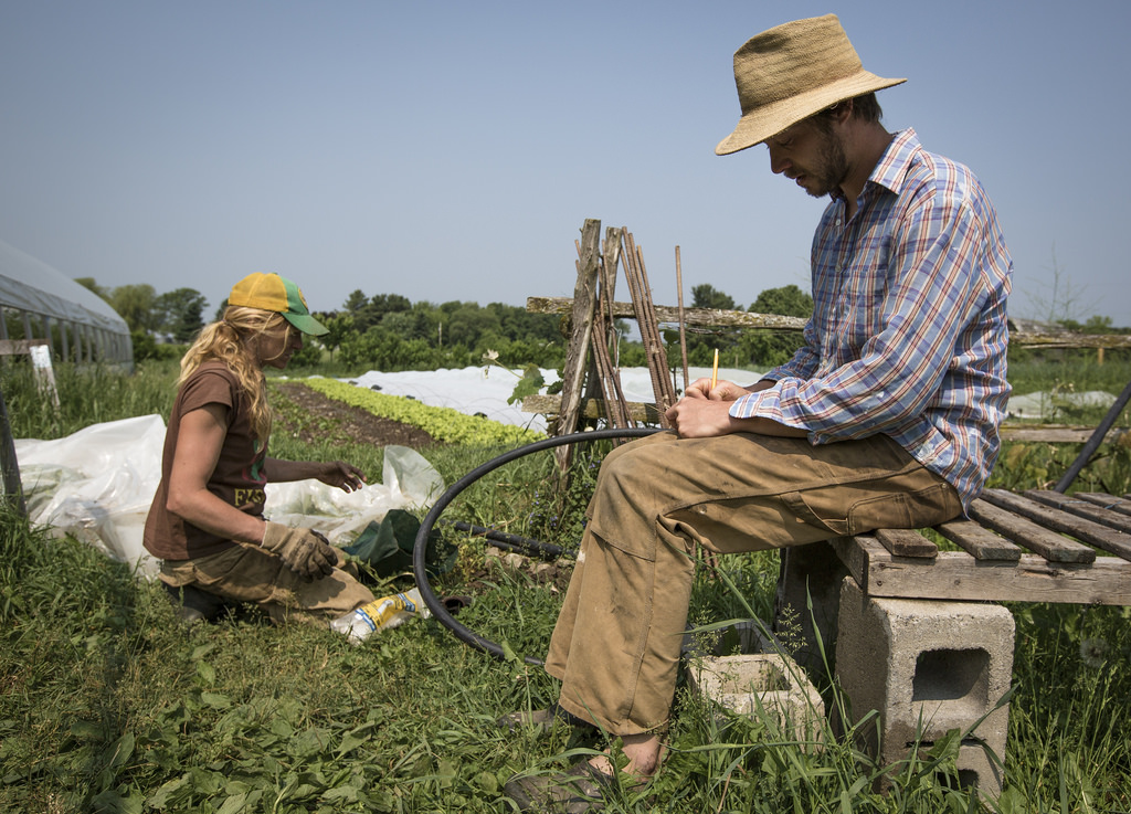 The Market Gardener in the Field