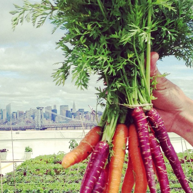 Carrots over the NYC Skyline