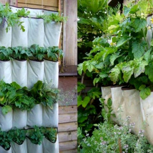 Herb Gardening Indoors Growing herbs indoors carts and tools hanging herb garden workwithnaturefo